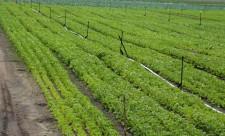 img_1493-dev-agricol-bukavu